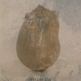 並川 誠 展 のお知らせの画像